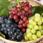 葡萄狩りと温泉|掛川プチ旅行
